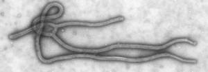 Ebola_Virus_