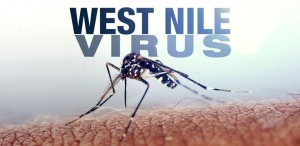 west-nile-virus-mosquito-generic-file-mgfx-1024x500